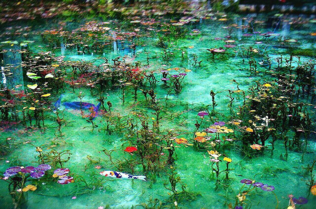 モネの池 場所 どこ